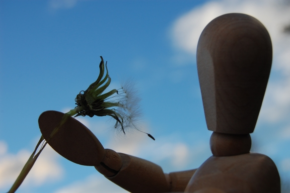 A seed of a wish awaiting a breeze...