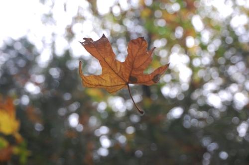 Thank you, Autumn