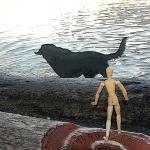 Ocean loving labrador