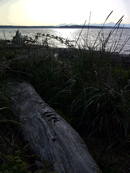 Driftwood face  in sea grass