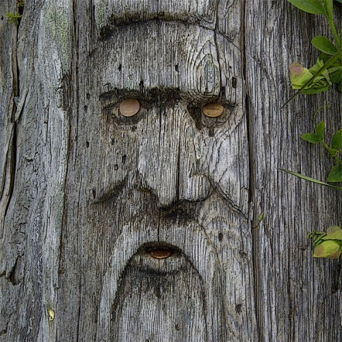 Nordic Neptune, face carved in driftwood