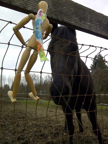 Curious equine