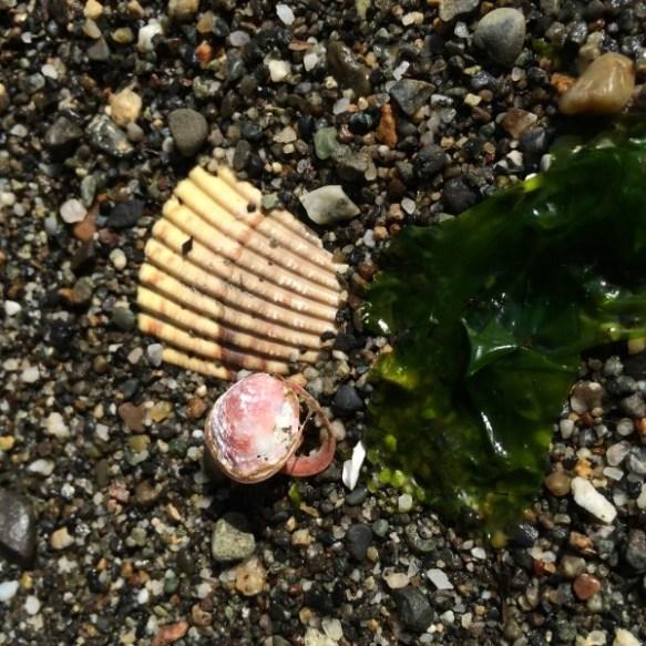 I found a tiny pink seashell