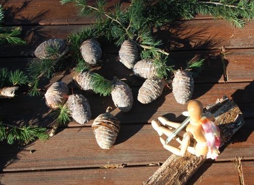Pinecones - 1