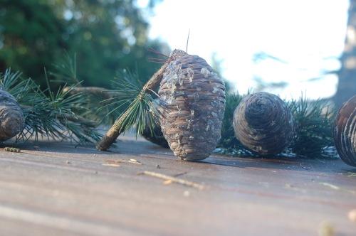 Pinecones - 11