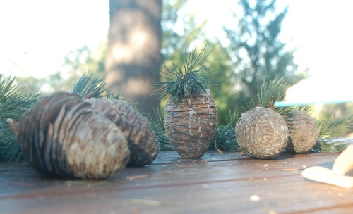 Pinecones - 13