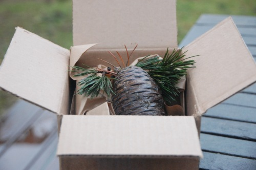 Pinecones - 15-inbox